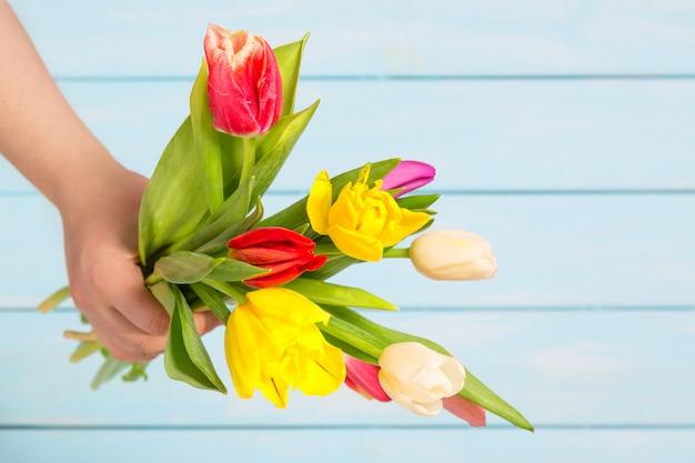 Chiuda su dei fiori variopinti del tulipano in mani femminili contro il fondo di legno blu-chiaro