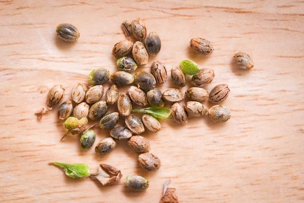Chiuda su dei semi di marijuana o dei semi di canapa della canapa su fondo di legno