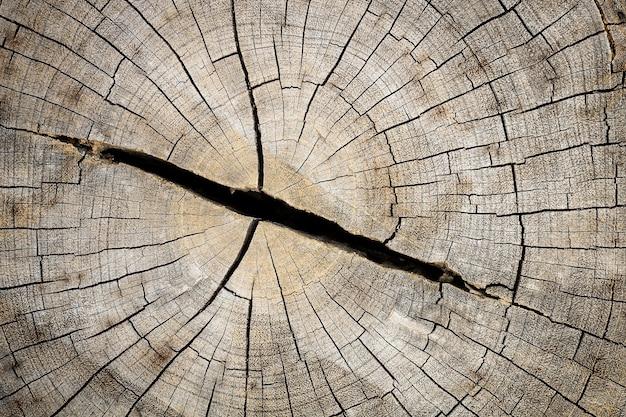 Chiuda su del ceppo di legno tagliato con le crepe e gli anelli annuali come modello.