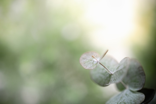 Chiuda su della foglia di verde di vista della natura su fondo ed ombra vaghi della pianta con lo spazio della copia.