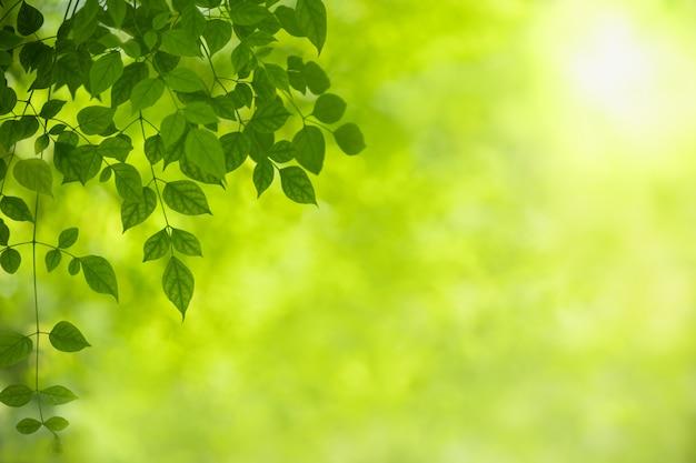 Chiuda su della foglia verde della natura su pianta vaga sotto luce solare.