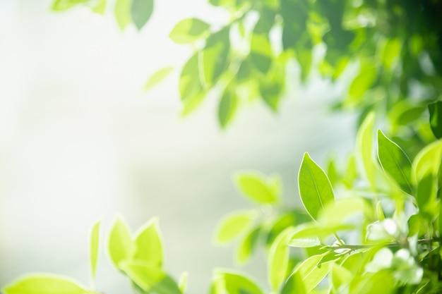 Chiuda su della foglia verde di vista della natura sul fondo vago della pianta nell'ambito di luce solare con il paesaggio delle piante naturali del fondo dello spazio della copia e del bokeh, concetto della copertura dell'ecologia.
