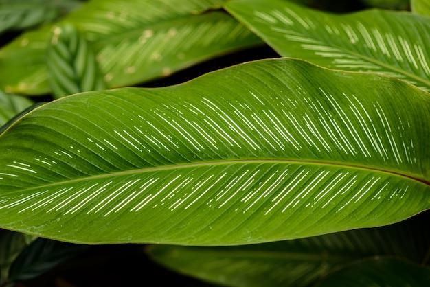Chiuda su delle foglie struttura o fondo