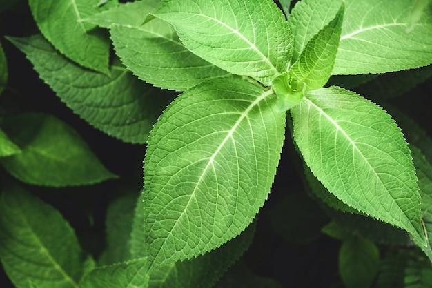 Chiuda su delle foglie verdi della natura nel giardino con l'albero della foglia della sfuocatura e del fuoco molle