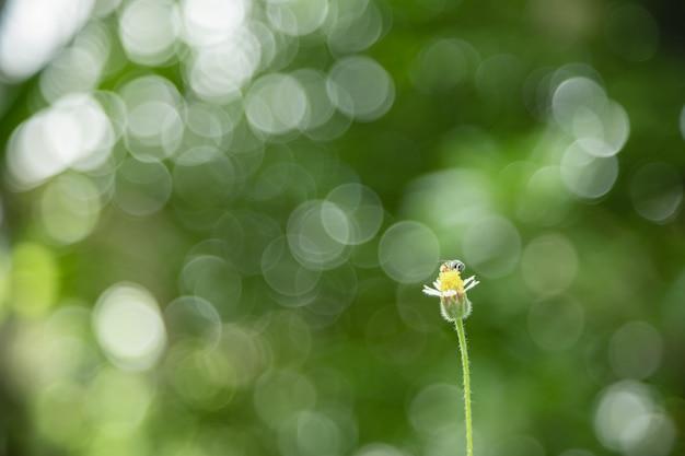 Chiuda su di piccoli fiore e ape con la natura verde della foglia come fondo.