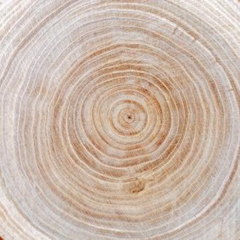 Chiuda su struttura del taglio di legno. anelli degli alberi. organico naturale.