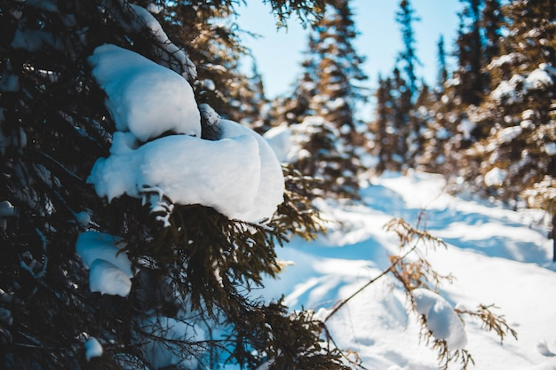 Chiuda sugli alberi e sul campo di neve in inverno