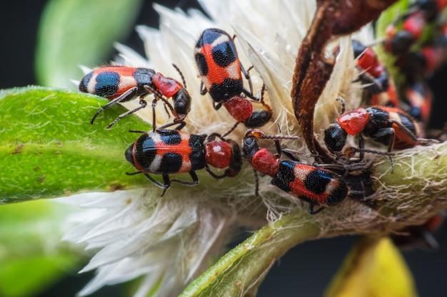 Chiuda sugli insetti sul fiore