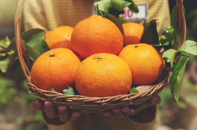 Chiuda sui bambini che tengono il canestro di grandi frutti del mandarino nell'azienda agricola organica di agricoltura