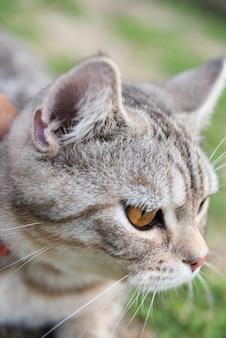 Chiuda sui bei occhi gialli del gattino