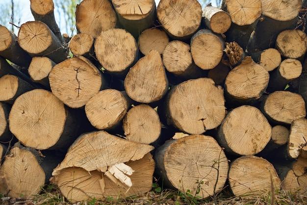 Chiuda sui ceppi segati impilati di legno per fondo o l'astrazione