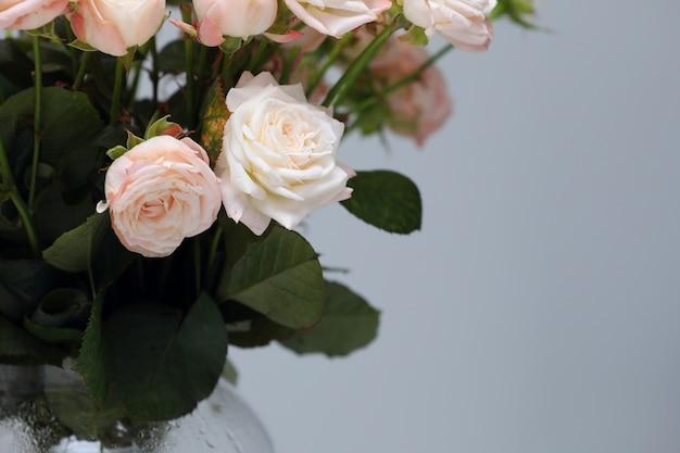 Chiuda sui fiori rosa freschi delle rose isolati su fondo grigio. copia spazio. festa della donna