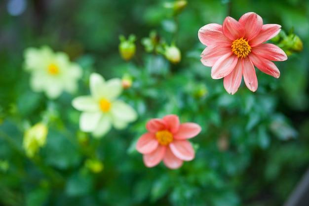 Chiuda sui fiori rossi nel giardino