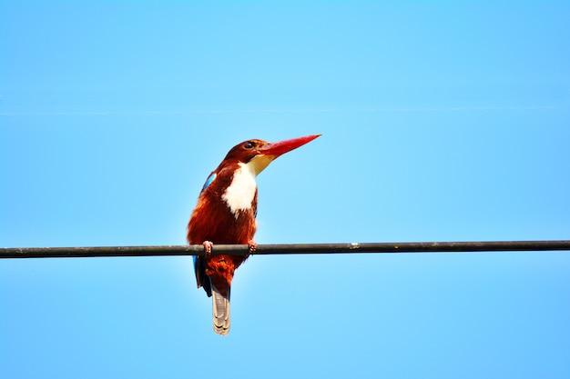 Chiuda sul bello uccello su un cavo con cielo blu