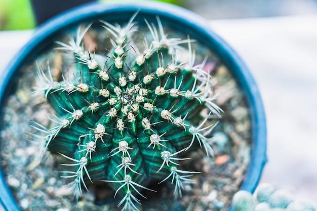 Chiuda sul cactus con spazio per mettere il testo