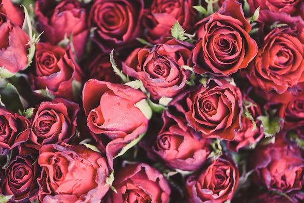 Chiuda sul concetto romantico di giorno di s. valentino di amore dei fiori rosa del fondo. fiori multicolori fioritura bouquet di fiori di rose rosse fresche naturali