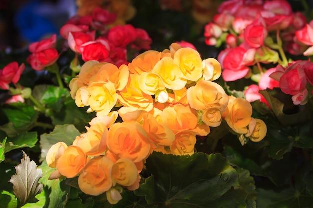 Chiuda sul fiore con sole