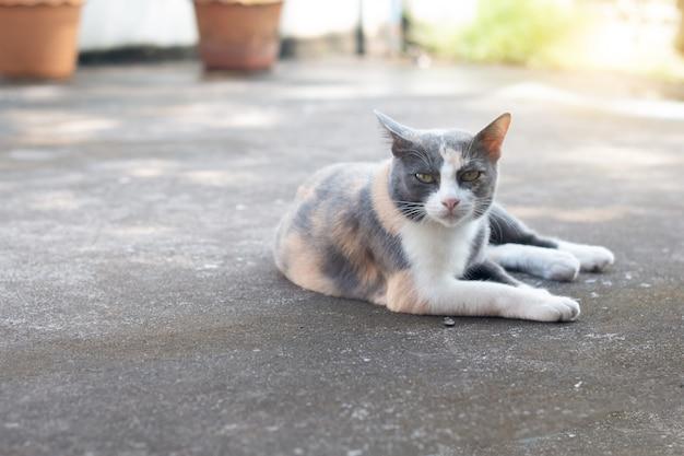 Chiuda sul gatto di soriano grigio rimanere sul pavimento.