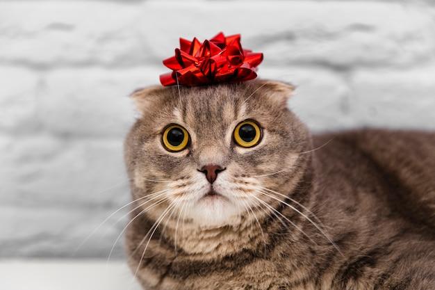 Chiuda sul gatto sveglio con il nastro rosso in testa