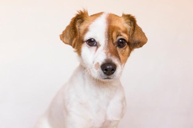 Chiuda sul ritratto di giovane cane sveglio sopra amore per il concetto degli animali