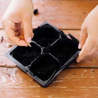 Chiuda sul vassoio di semina sulla tavola