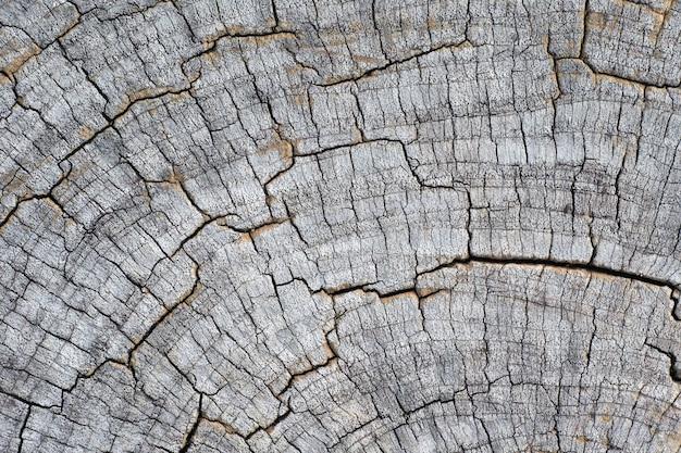 Chiuda sull'albero tagliato rotondo del ceppo di legno con gli anelli annuali come struttura di legno