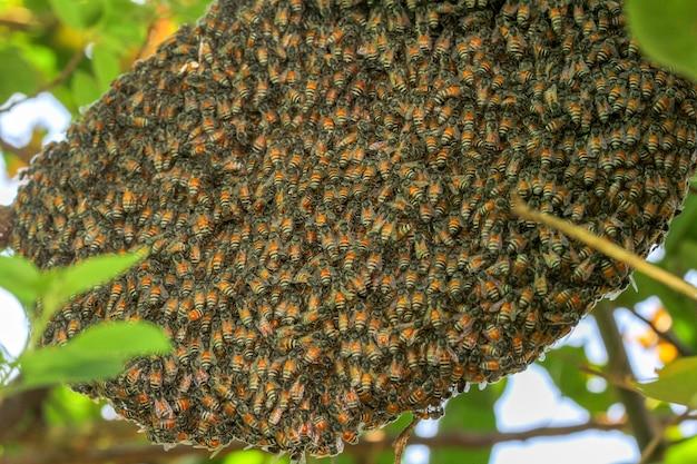 Chiuda sull'ape del gruppo in favo sull'albero.