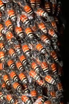 Chiuda sull'ape del gruppo in favo sull'albero