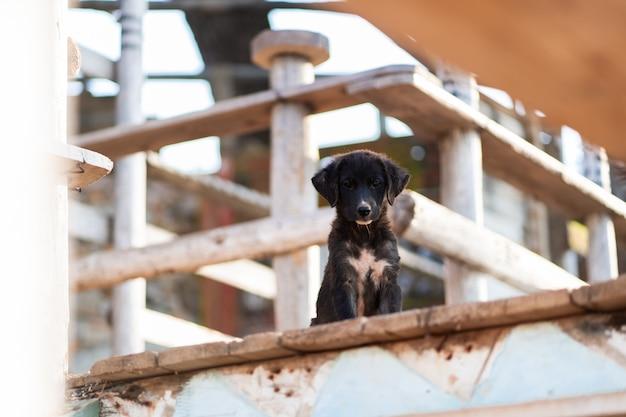 Chiuda sull'immagine del cane in bianco e nero felice divertente della razza mista si siedono su un pilastro di legno fuori con fondo marrone. concetto di migliori amici umani e animali domestici. concetto di rifugio.