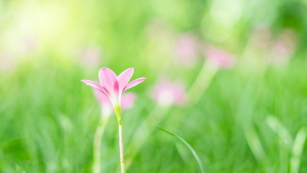 Chiuda sull'immagine di singolo fiore rosa e del fondo verde della sfuocatura