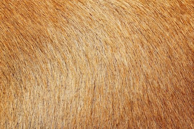 Chiuda sull'immagine sulla pelliccia animale, adatta come priorità bassa
