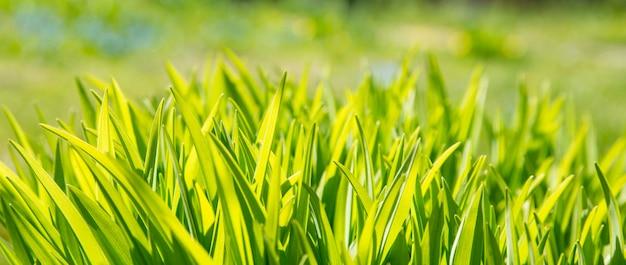 Chiuda sull'insegna dell'erba verde. foglie fresche della primavera nel giorno di lustro del sole