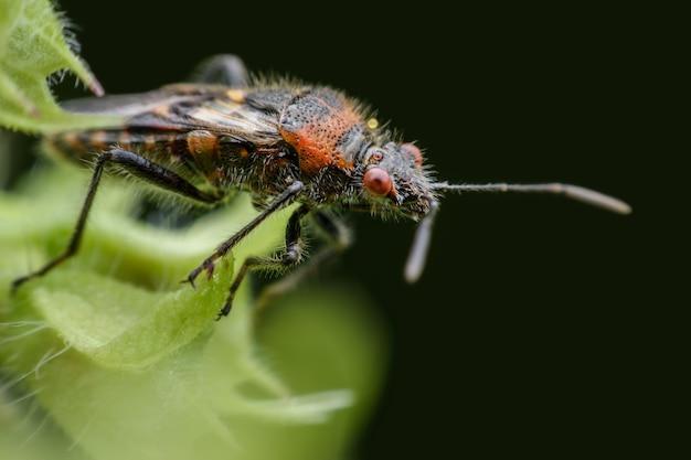 Chiuda sull'insetto sulle foglie del basilico