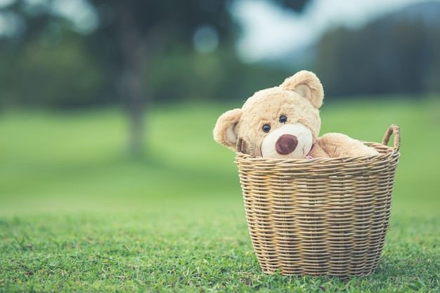 Chiuda sull'orsacchiotto marrone adorabile che si siede sul campo di erba