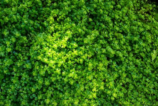 Chiuda sulla bella foresta verde del muschio.
