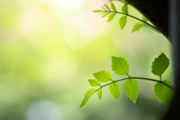 Chiuda sulla bella vista delle foglie verdi della natura sul fondo vago dell'albero della pianta