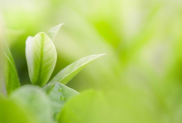 Chiuda sulla bella vista delle foglie verdi naturali su fondo vago pianta