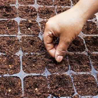 Chiuda sulla donna della mano che semina il seme dell'anguria su tay