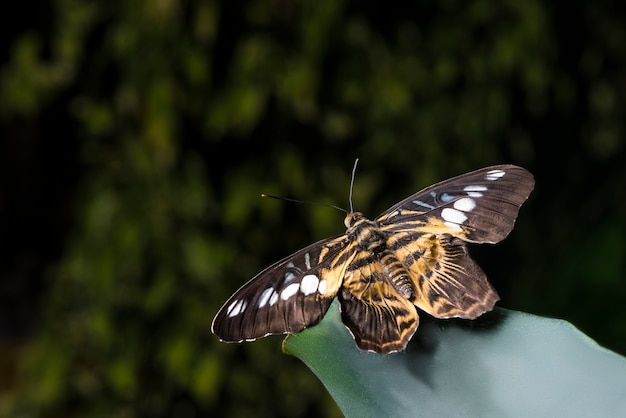 Chiuda sulla farfalla su una foglia