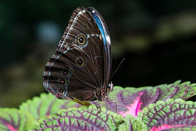 Chiuda sulla farfalla sulle foglie variopinte