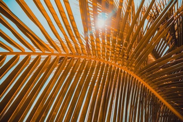 Chiuda sulla foglia della noce di cocco con il fondo del cielo