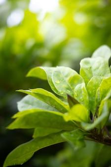 Chiuda sulla foglia verde sotto luce solare nel giardino.