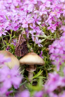 Chiuda sulla foto della farfalla sul fungo fra i bei fiori del flox