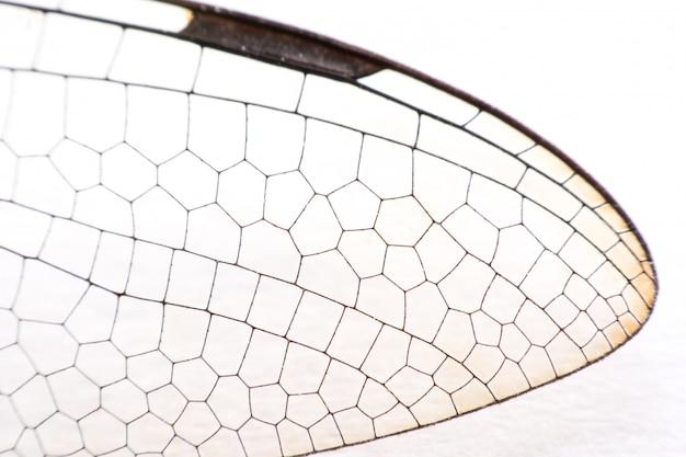 Chiuda sulla macro della libellula delle ali su bianco