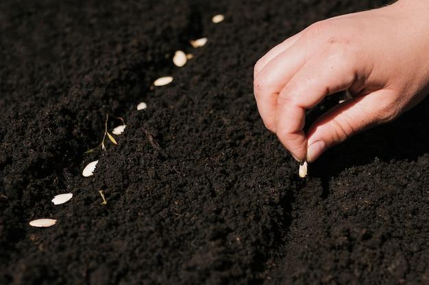 Chiuda sulla mano che pianta i semi
