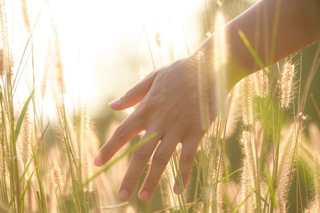 Chiuda sulla mano della donna sta toccando erba fiore in campo con la luce del tramonto