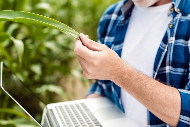 Chiuda sulla mano maschio che tocca una foglia. agricoltore senior che tiene un computer portatile in un campo di grano