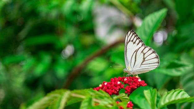 Chiuda sulla maschera dell'insetto della farfalla che si alimenta fiore in giardino