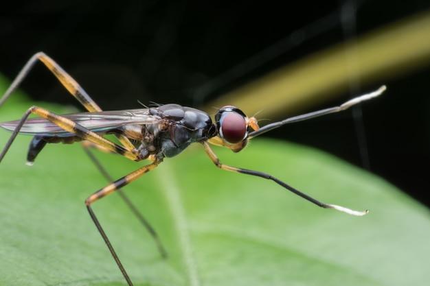 Chiuda sulla mosca della gamba lunga