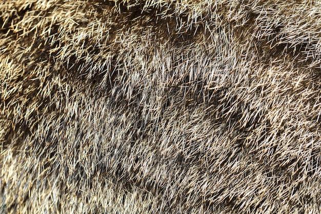Chiuda sulla pelle di gatto grigia per il modello e il fondo